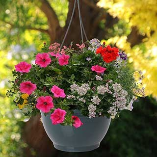 Pair Of Pre-Planted Designer Mix Hanging Baskets