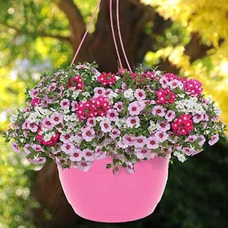 Pair of 'Lipgloss Mix' Pre-Planted Baskets