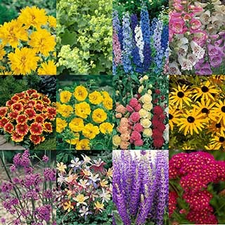 Complete Hardy Garden Perennial Collection