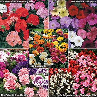 The Essential Summer Patio Garden Collection