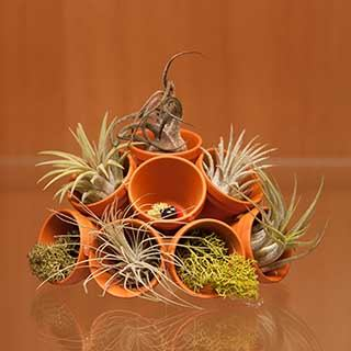 Ladybird in Pot Air Plant Kit