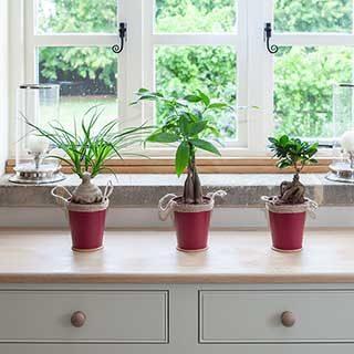 Asian Inspirations Houseplant Mix 3 x 13cm zinc pot