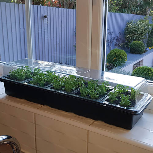 PlantPak Windowsill Propagator kit - 3 sets for 90 plants
