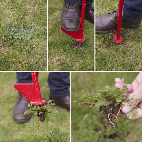 Mr Weedy - Weed Removal Tool