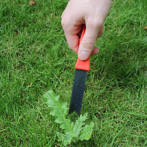 Weed Root Cutter