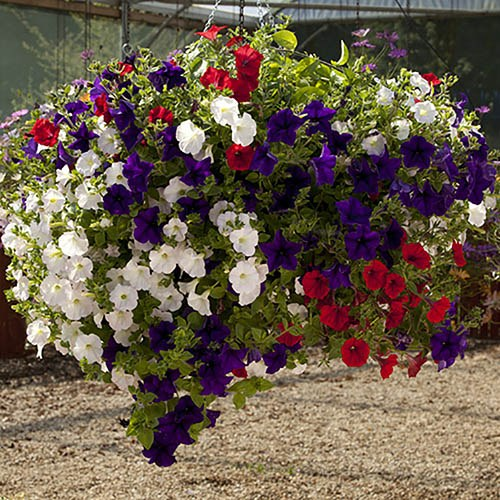 Set of 4 x 12 Easy Fill Hanging Baskets