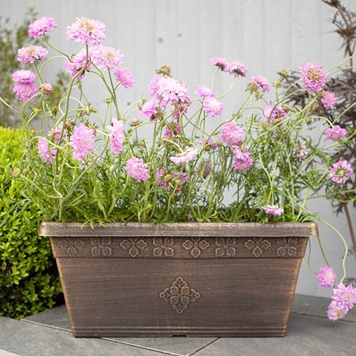 Plastic Windowbox Bronze 50cm long