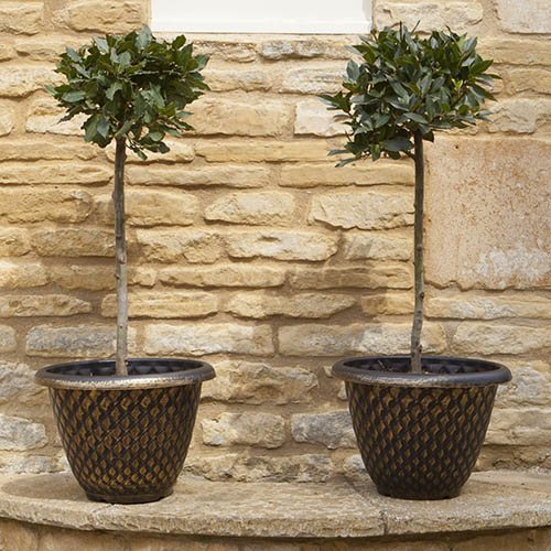 Pair of Large 13in Gold Pinecone Planters