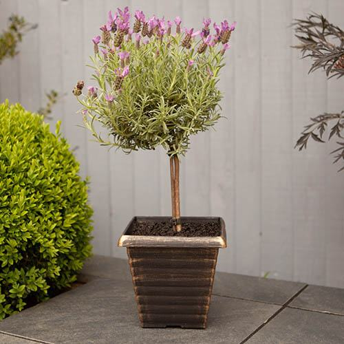 Tall Gold Effect Tapered Planter