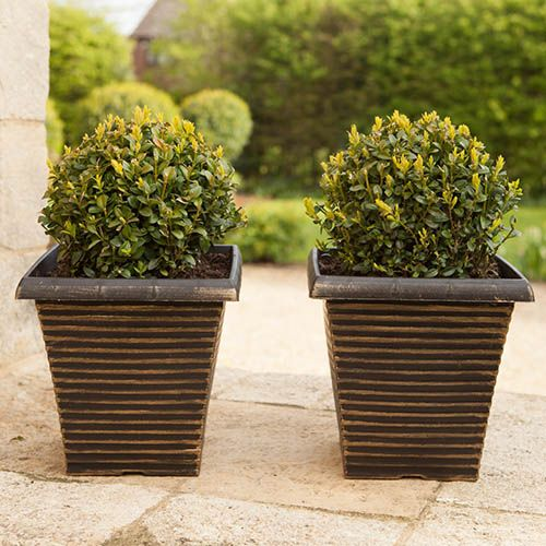 Pair of Tall Gold Tapered Planters