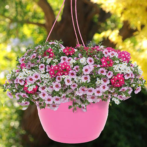 Pink Hanging Baskets - Pair