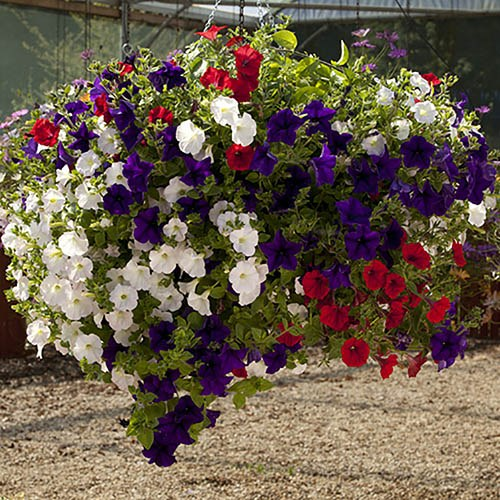 15 inch Easy Fill Hanging Baskets