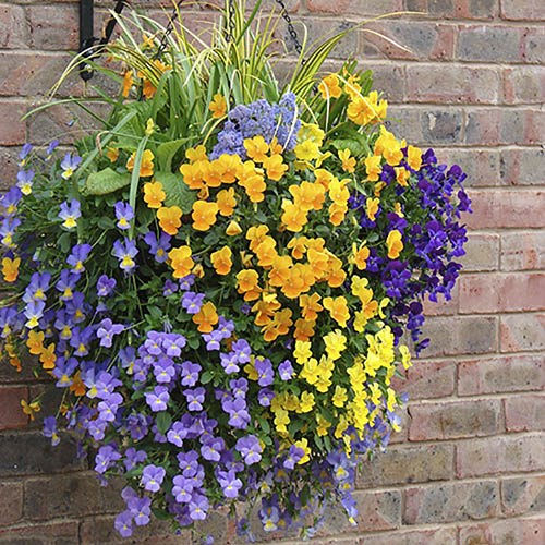Pair of 12 Easy Fill Hanging baskets