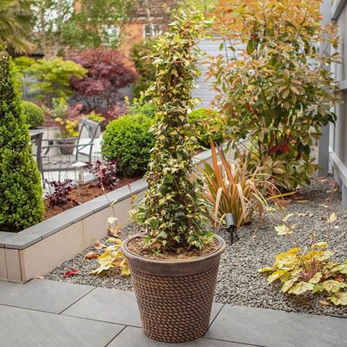 Premium Rope Pattern Planter