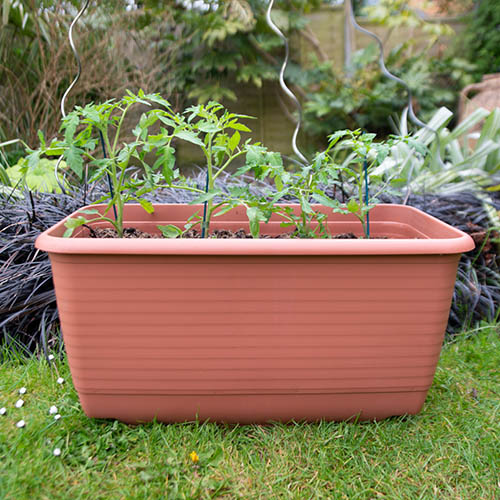 Vegetable Trough & FREE Canes