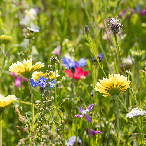 Mini Meadow Easy Sow Wild Flowers 10sq.m kit