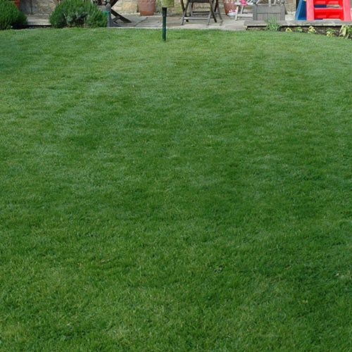 Doff Super Patch Lawn Repair 600g