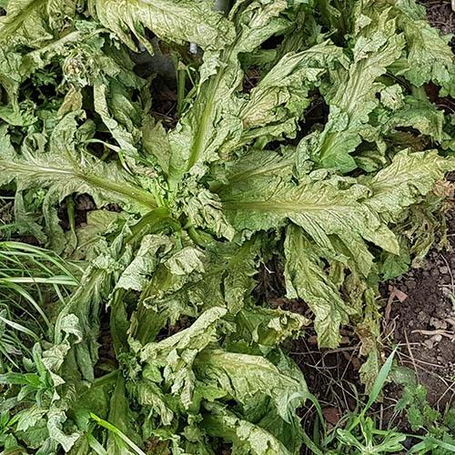 ecofective Weed & Moss Killer 4Ltr RTU + hose