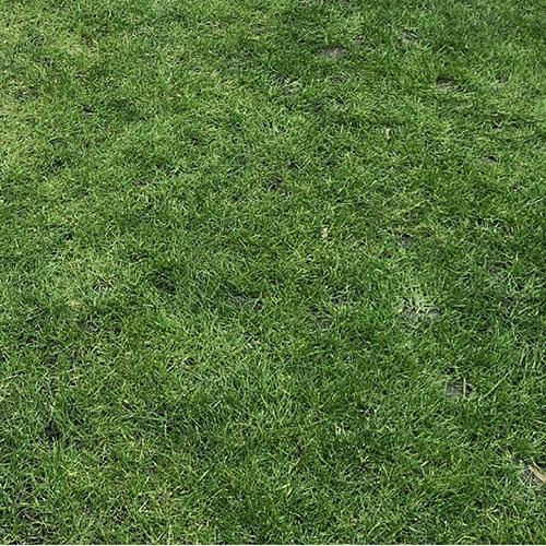 ecofective Natural Liquid Lawn Feed