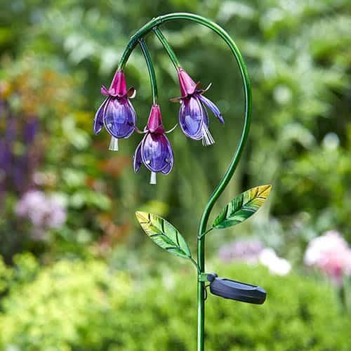 Fuchsia Solar Flower