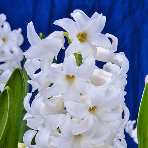 Large Hyacinth Indoor Basket - White