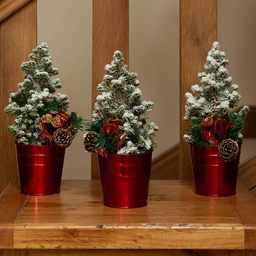 Miniature Decorated Living Christmas Trees