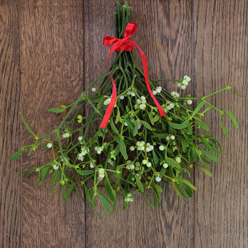 Bunch of Fresh Real Mistletoe - 10 sprigs