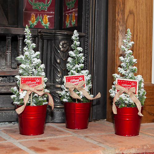 Miniature Decorated Living Christmas Trees - 3 pack