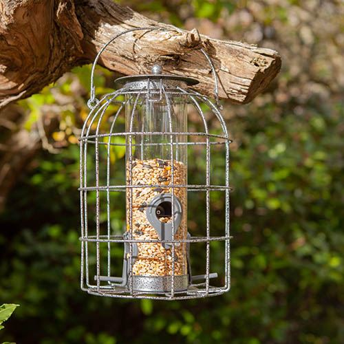 Save 20% Off Squirrel Resistant Seed Feeder