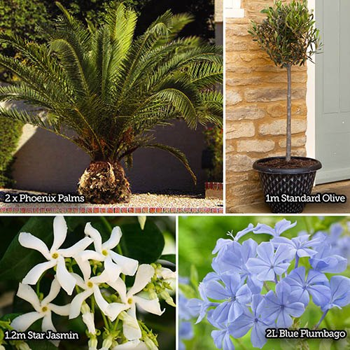 Complete Mediterranean Patio Bundle