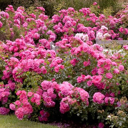 Rose Garden Bundle
