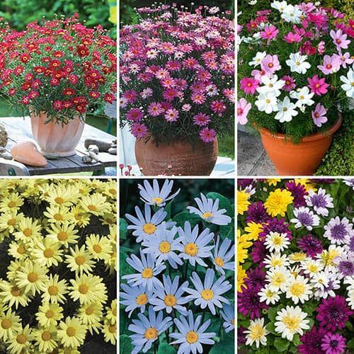 24 Jumbo Plugs Perfect for Planters