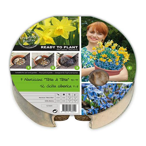 Pair of Narcissi Plant-O-Mat Drop In Bulb Kits with Decorative Planters