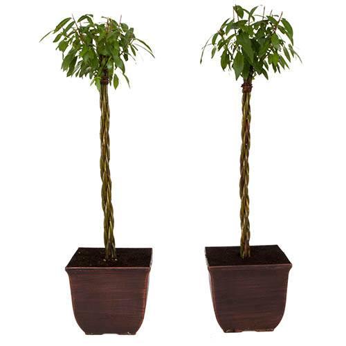 Pair of Plaited Willows 75cm Tallin Decorative Pots