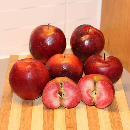 Premium Apple Tree Tickled Pink