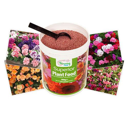 Complete Patio Fruit Bundle