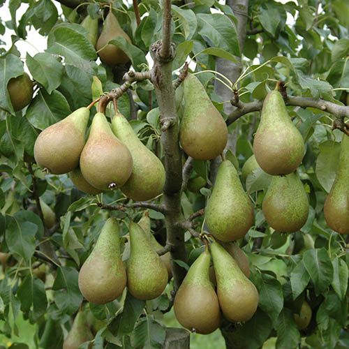 Mini Orchard Fruit Tree Collection with Grow Pods