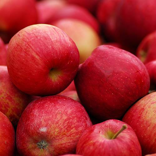 Apple Red Love