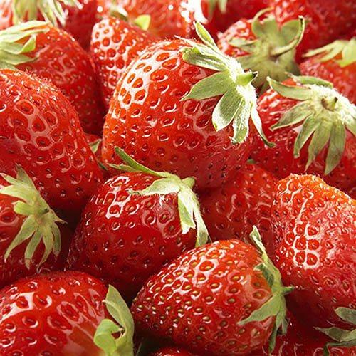 Everbearer Strawberry Albion