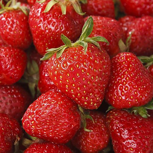 Pack of 6 potted Strawberry Sweetheart Plants