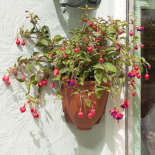 Strawberry Growin-Pods