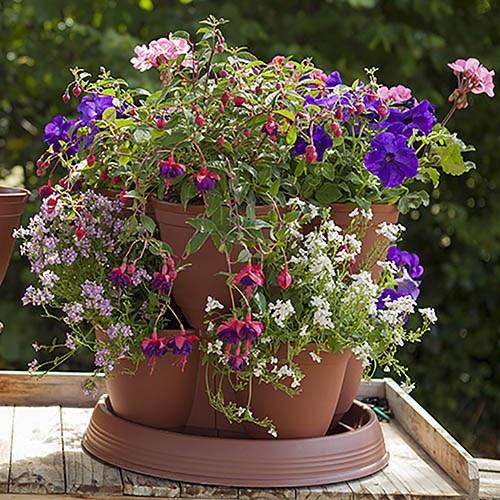 8 Strawberry Grow In Pods & 8 Buddy plants