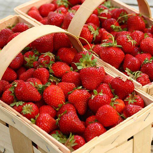 Strawberry Honeoye Pack of 20 Runners