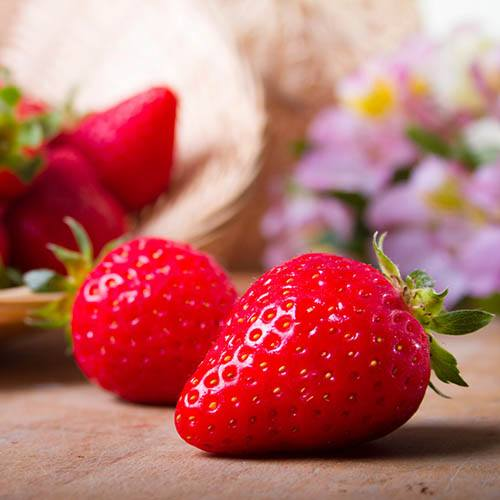 Strawberry Hanging Basket kit.