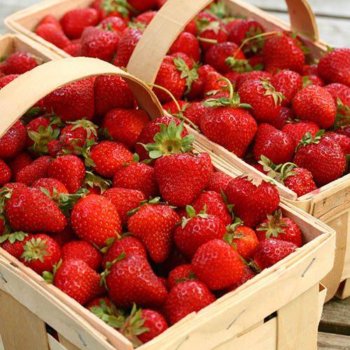 Premium Strawberry Planter