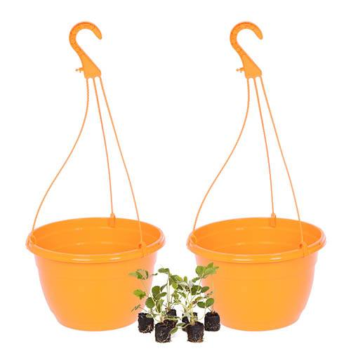 Strawberry Hanging Basket kit - Pair