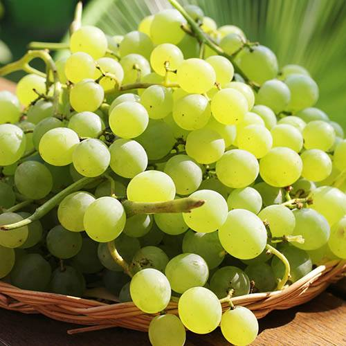 Table Grape Superior Seedless White standard