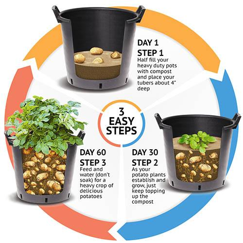 Complete Second Cropping Potato kit with 30L pots and fertiliser