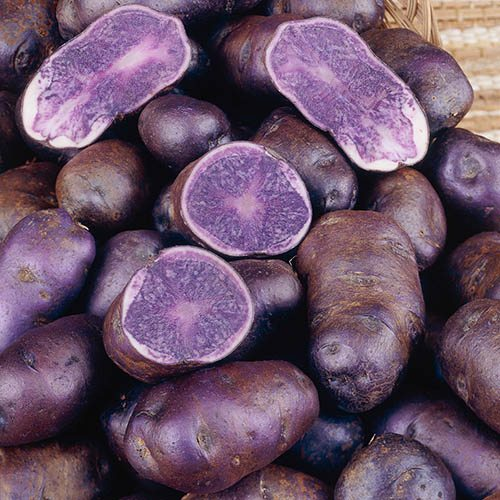 Premium Seed Potato Albert Bartlett Purple Majesty - maincrop