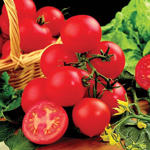 Tomato Shirley F1